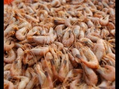 Shrimp: The Disgusting Truth