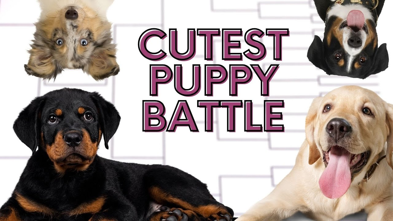 National Puppy Day 2021 is today (March 23) | Here are some treats ...
