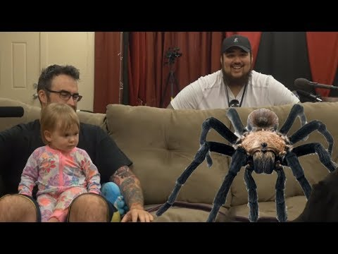 Giant Spider On The Couch | Meme Couch Arachnophobia