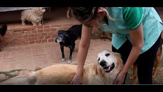 Itu em Dia - Associação de Socorro e Proteção aos Animais (ASPA Itu)