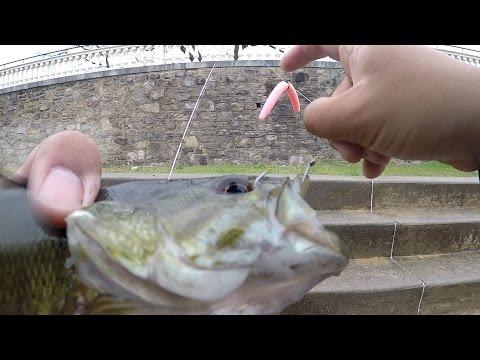 """The """"ONE SENKO"""" Bass Fishing CHALLENGE!!! (Philadelphia, PA)"""