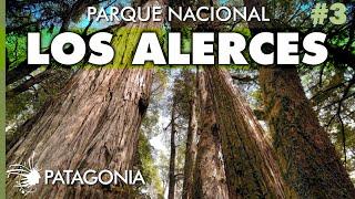 El BOSQUE MILENARIO, Parque Nacional Los Alerces | Capítulo 3 | Hoy No Duermo en Casa