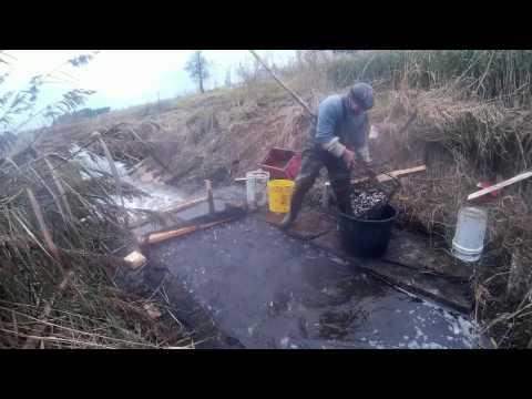 видео: Вылов сеголетка амура в рыбоуловителе , в конце в бочке