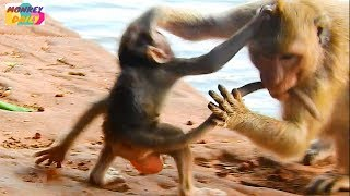 Connie mom really cool heart for bad young monkey that doing badly with her baby|Monkey Daily 650