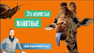 Эти непростые животные | ЕХперименты с Антоном Войцеховским