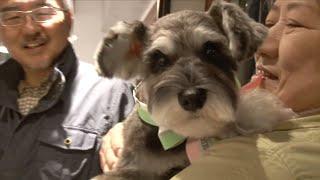 Haru  The #RescueDog #保護犬 #シュナウザー