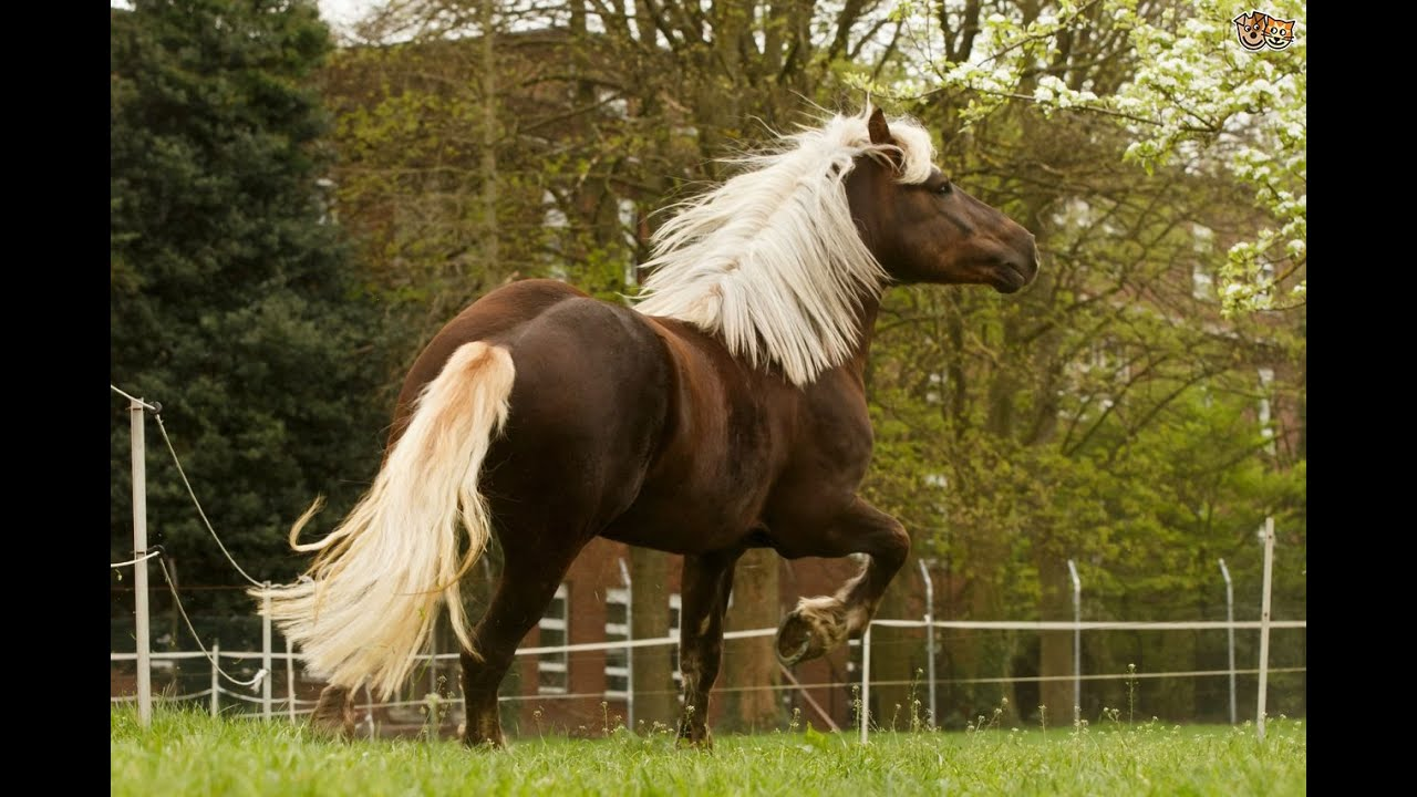 Most beautiful arabian horses in the world youtube - Arabian horse pictures ...