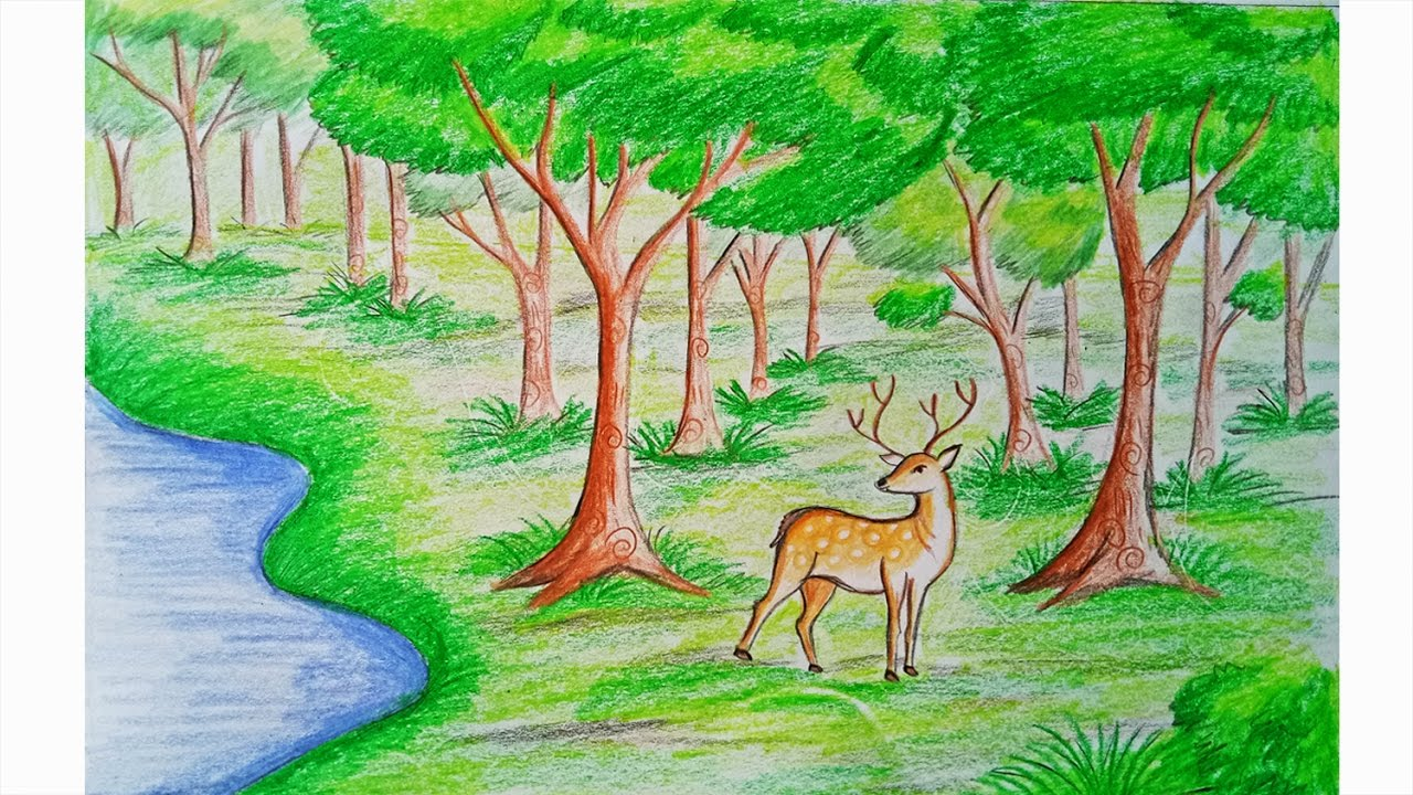 hight resolution of how to draw forest scene step by step very easy