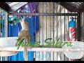 Masteran Prenjak Lumut Gacor Sekaligus Pancing Bunyi Prenjak Bahan  Mp3 - Mp4 Download