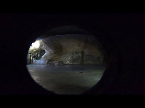 العثور على ثالث -أسد أمريكي- في شوارع في شوارع العاصمة التشيلية سانتياغو