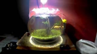 filter aquarium bulat