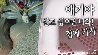 (ENG SUB)I met a stray kitten with pus. And I asked her to go to my house.