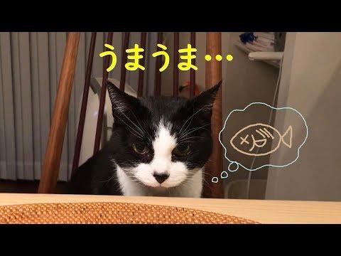 夕飯�干物を察知��猫�む���ん�����ゲット�る�?