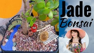 Bonsai - How to Bonsai Jade