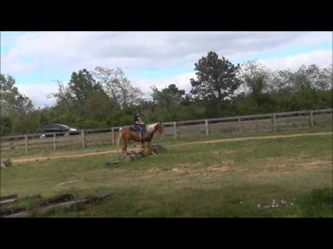 Gentle Sorrel with Flaxen Mane/Tail Tennessee Walking Horse Gelding for sale