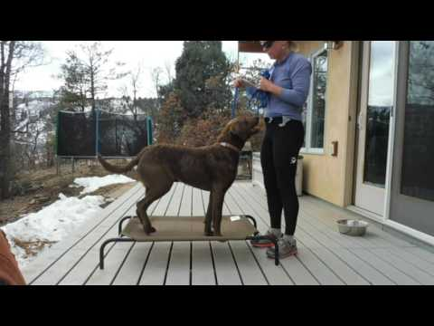 train-your-dog-to-stay;-place-command-part-1