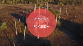 Aripeka at Sunset  - 4K