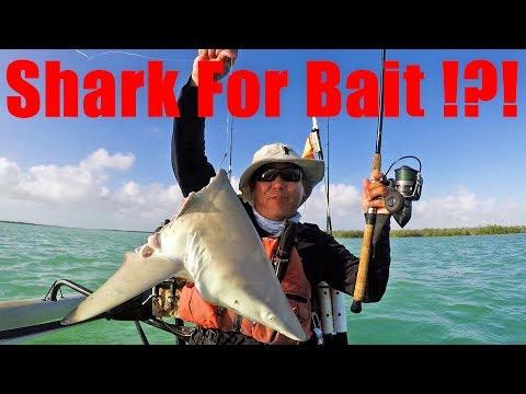 Using Shark For Bait To Catch Monster Sharks?