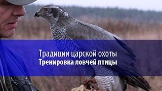 Традиции царской охоты возрождает житель Пружанского района. Панорама