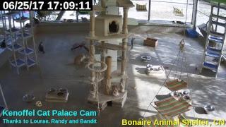 Animal Shelter Bonaire - Cat Palace thumbnail