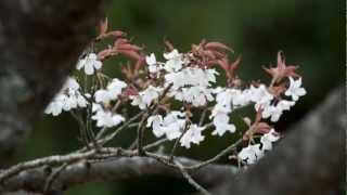 2012年3月10日、青島から旧国道を通って堀切峠へ行って来ました。 ほぼ...