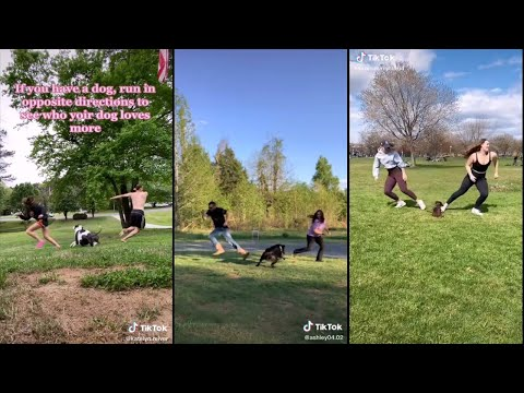 Run in opposite directions to see who your dog loves more