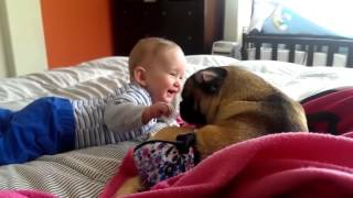 Cute Babies Laughing Hysterically at Dogs