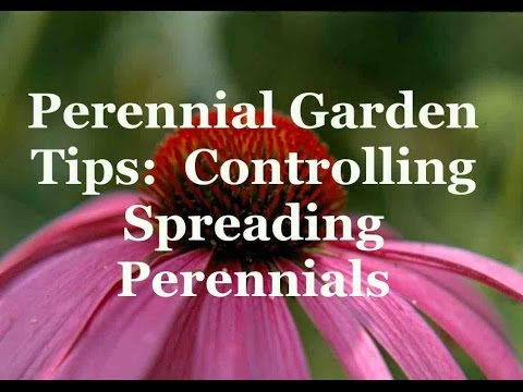 Perennial Garden Tips Controlling Spreading Perennials Youtube