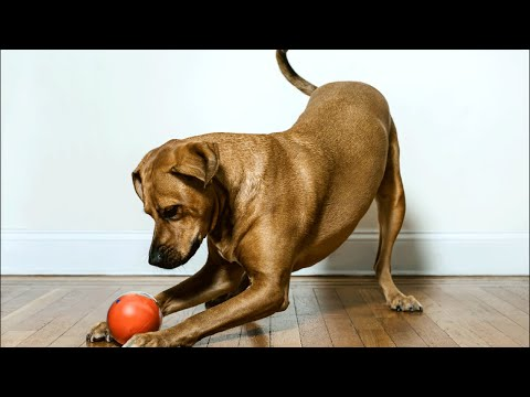 Unboxing PlayDate Smart Pet Ball From Indiegogo