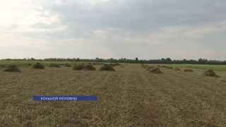 В Рыбницком районе кормом для домашних животных теперь занимаются местные власти