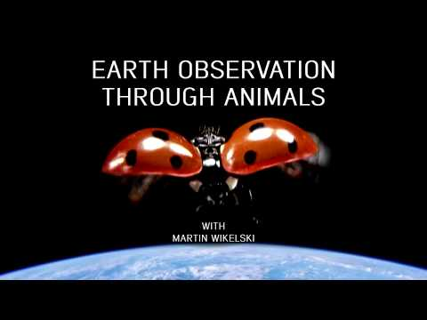 Earth observation through animals with Martin Wikelski