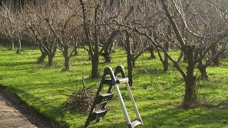 Осенняя обрезка деревьев. Как обрезать яблоню осенью(Осенняя обрезка деревьев. Как правильно обрезать яблоню осенью. Проводится осенняя обрезка следующим обра..., 2014-10-14T18:36:08.000Z)