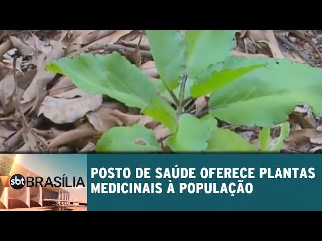 Posto de saúde oferece plantas medicinais à população | SBT Brasília 15/02/2019