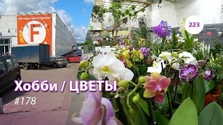 223#178 / Хобби-Цветы / 11.2019 - Floreville (ФЛОРЭВИЛЬ. МОСКВА)