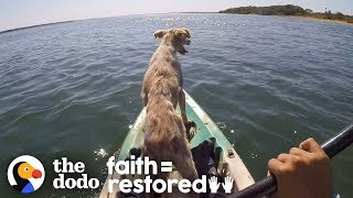Dog Abandoned On A Desert Island Is Thrilled To Be Rescued | The Dodo Faith=Restored