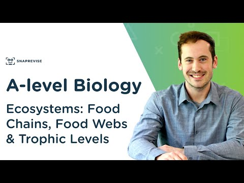 Ecosystems: Food Chains, Food Webs & Trophic Levels | A-level Biology | OCR, AQA, Edexcel
