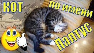 Кот по имени Палтус/необычные клички/котята/про котят