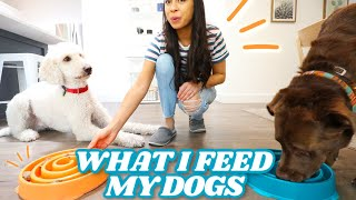 Why THIS is the best food for dogs!  Plus their favorite natural dog chew
