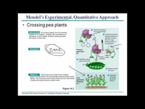Mendelian Genetics 1