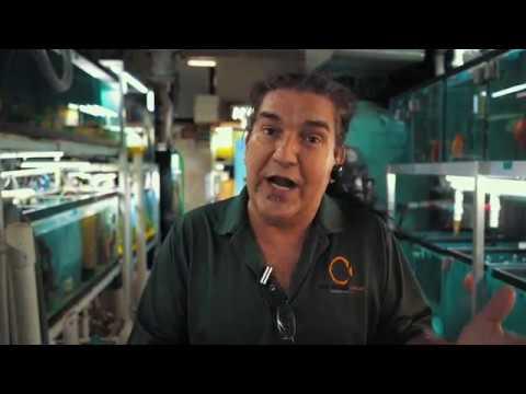 Jack Wattley Discus Breeding Process