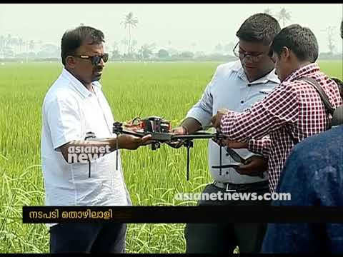 Drone used in paddy for pesticide spraying