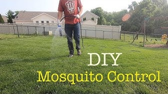 How to kill mosquitos and insects in the lawn
