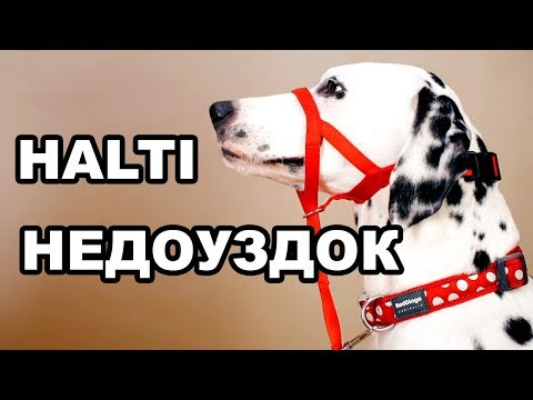 Халти | Как отучить собаку тянуть поводок | Самый удобный намордник