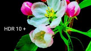 Beautiful Flowers in 4K HDR 10 plus