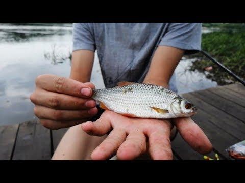 Рыбалка На Фидер. Ока В Черте Города Калуги 2019. рибалка рыбалка на оке