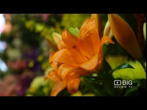 BG Flowers Flower Shop Melbourne For Florist And Flower Designs