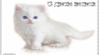 День кошек видео
