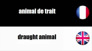 [Français - Anglais] Animal