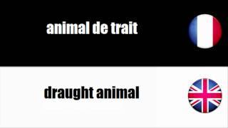 [Français - Anglais] Animal