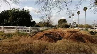 Phoenix neighborhood frustrated by untended lot